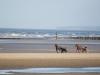 entrainement-trotteurs-utah-beach