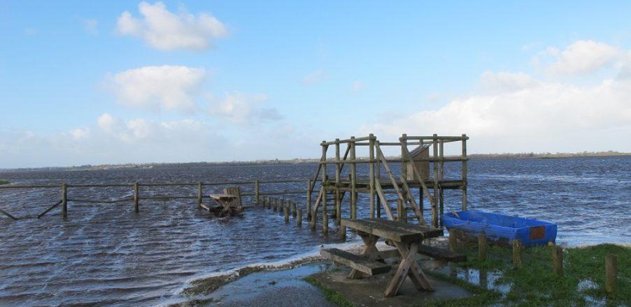 marais rivage blanc eau nature hiver auvers baie cotentin
