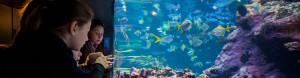 Cité de la Mer Cherbourg Aquarium