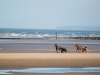 Chevaux trotteurs à l\'entrainement, plage d\'Utah Beach, Sainte Marie du Mont