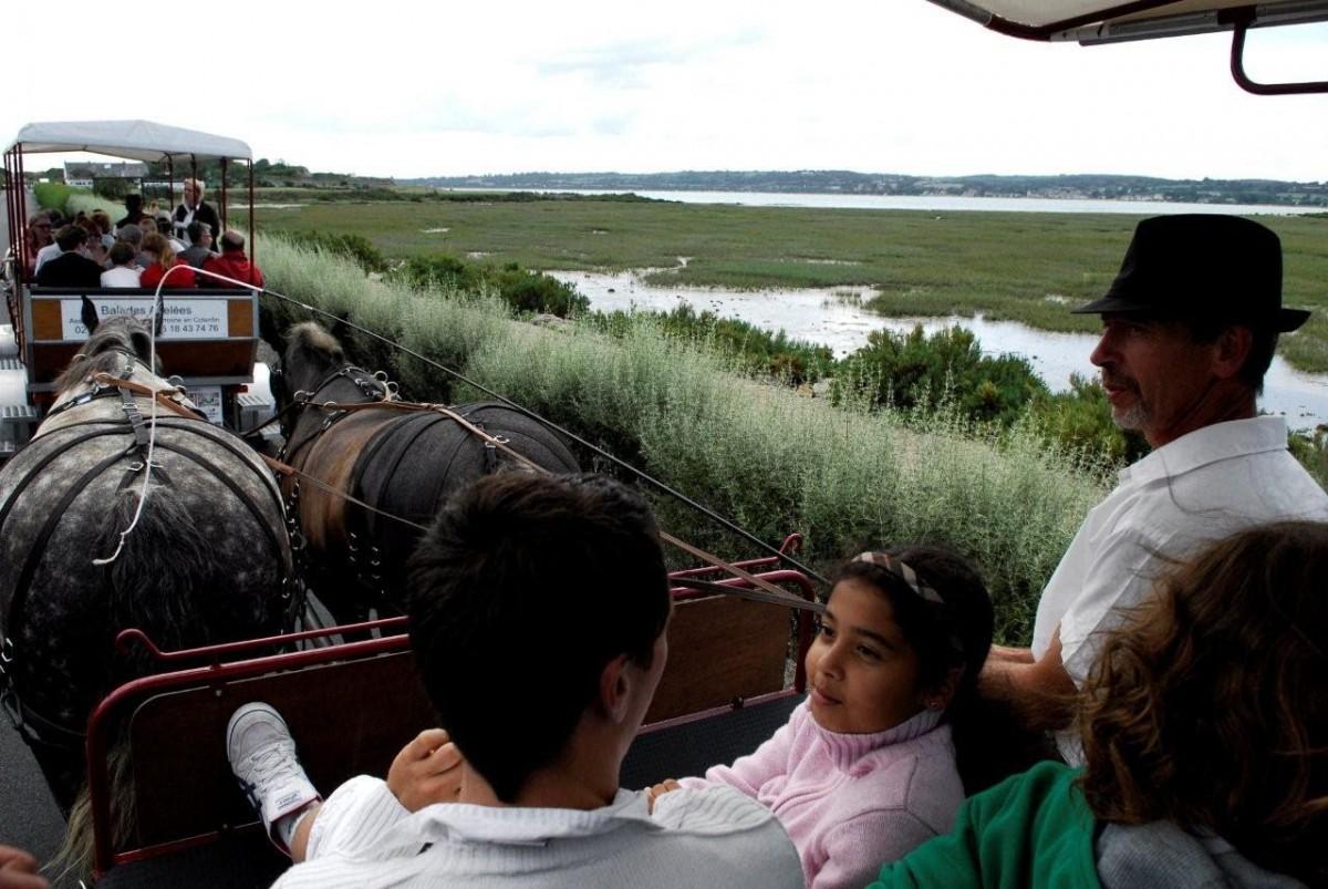 attelage_patrimoine_caleche_tour_cheval_chevaux_trait_cotentin