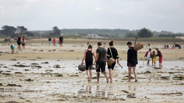 peche_pied_plage_utah_beach_crustaces_moules_huitres_coquillages_baie_cotentin