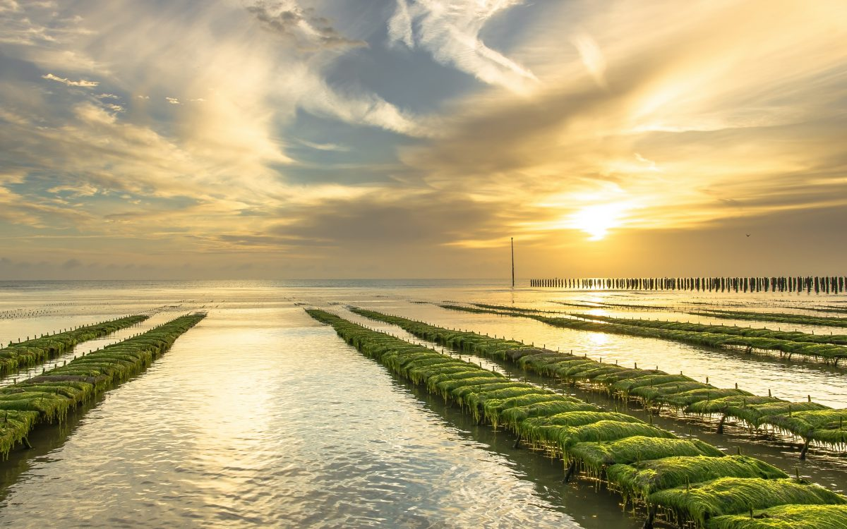 mer plage peche crustace moule huitre parc ostreiculture utah beach baie cotentin