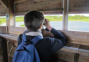 baie du cotentin observatoire marais nature oiseaux visite maison parc